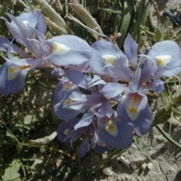 orchidea naturale