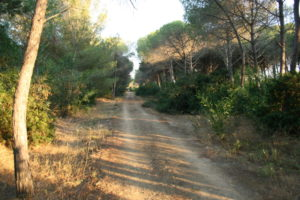 pineta riserva del platani