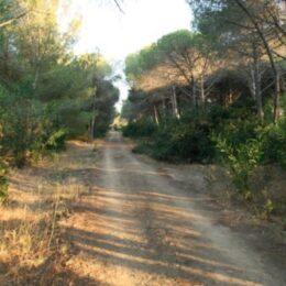 pineta riserva orientata del fiume  platani