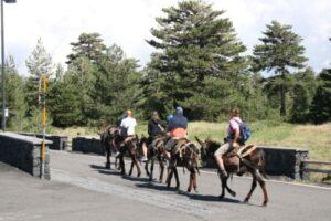 donkey escursion